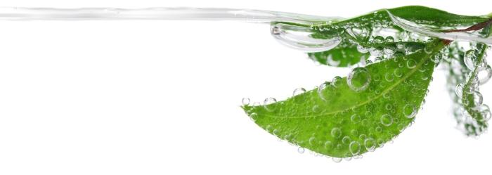 Vattenlöv_CleanTech